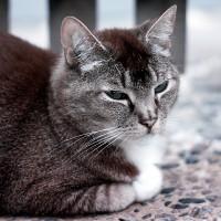 Infra Red Combat Cat
