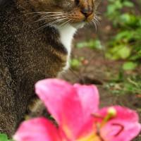...eine stets neugierige Katze...