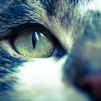 Katzendetails