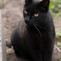 Katze Lu Zifer (Baubehörde)