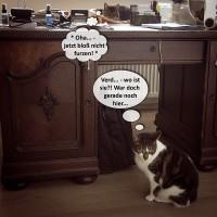 Katzenhatz