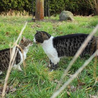 Katze und Kater (...)