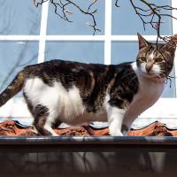 Katze vor dem Fenster - im 1. OG!