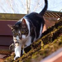 Nelly auf dem Dach