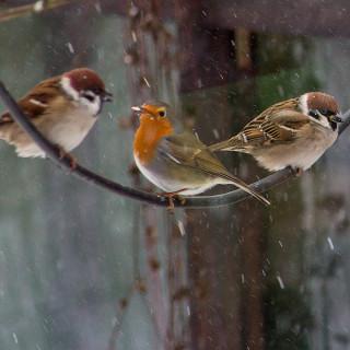 Schneetreiben im Garten