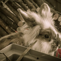 Thorin (Bambusschild)