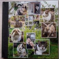 Erfahrungsbericht: Fotobuch Professional Line von Saal-Digital