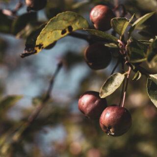 Gartenmakros (Herbst)